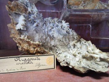 museum des sciences naturelles Angers_155444