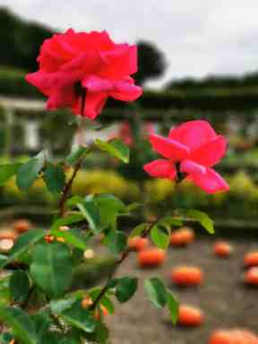 chateau et jardins de villandry_New Name_341805cf-d95c-4a30-8479-ee0e7d44364d