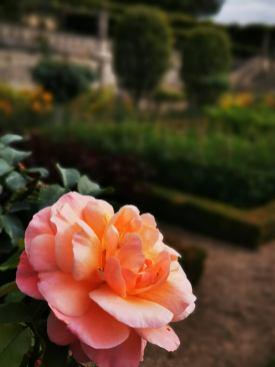 chateau et jardins de villandry_New Name_60d04e44-f881-4bdf-8faf-d2bac36e2823