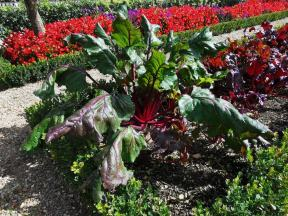 chateau et jardins de villandry_New Name_7084f8af-691e-45d5-862a-4eaf3c07425e