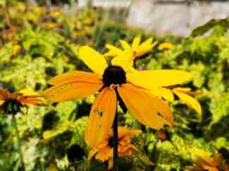 chateau et jardins de villandry_New Name_IMG_20190928_141408