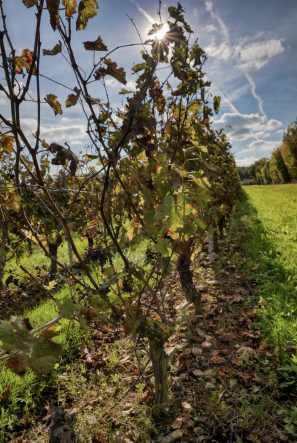 brissac quincé la foret et les vignes_JFP58745