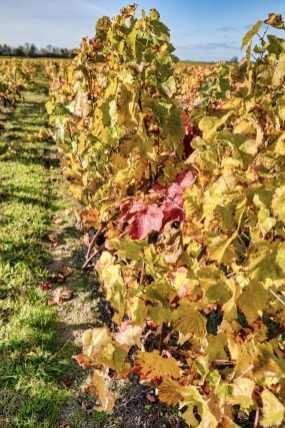 brissac quincé la foret et les vignes_JFP58912