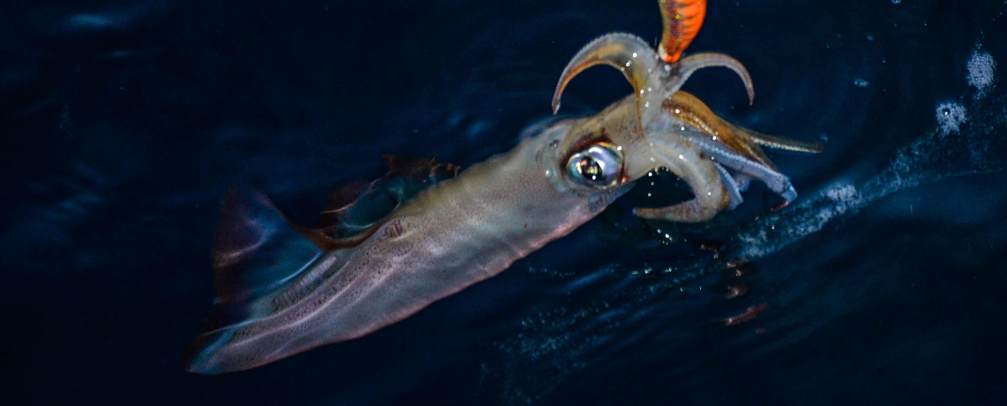 un animal Martin 25 novembre trouvé par Ajonc Peche-calamar