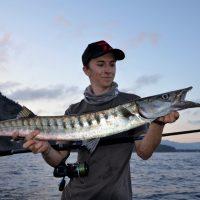 La pêche du barracuda, un prédateur redoutable à cibler