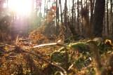 Ich glaube ich stehe im Wald