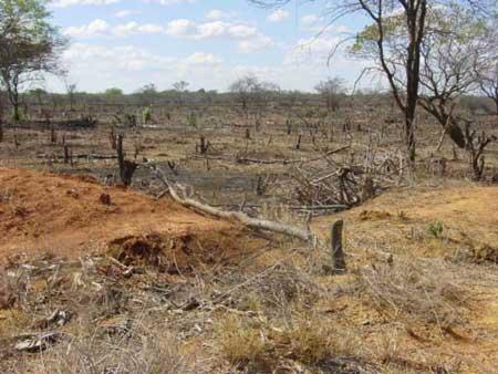 Bahia e Ceará foram recordistas na destruição da caatinga