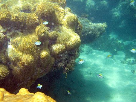 Recifes e corais