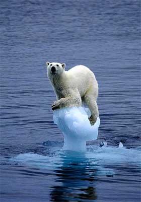 foto urso sobre gelo derretido aquecimento global