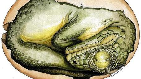 Foto de um ninho de dinossauro com 15 filhotes