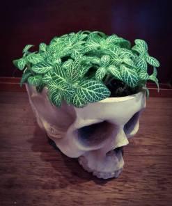 Vaso Skull