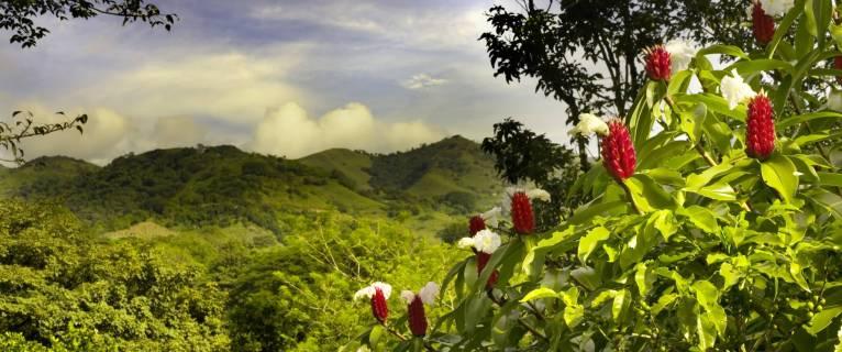 Le Costa Rica et le chocolat : une histoire pleine de saveurs