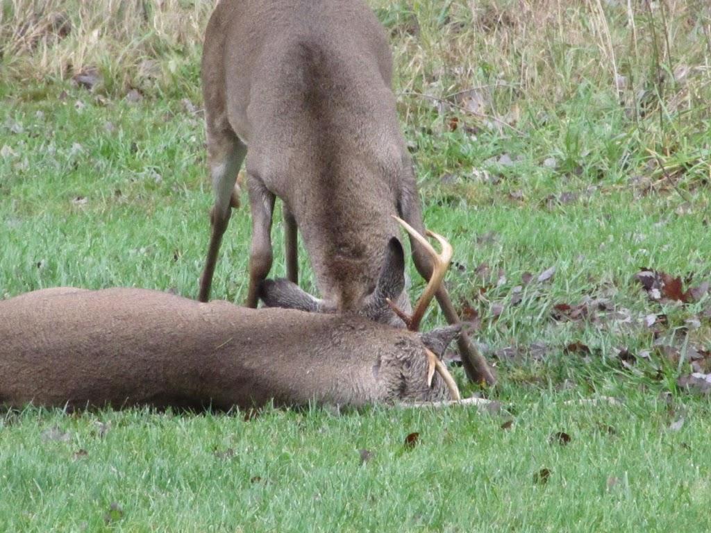 deer archives the obsessive neurotic gardener