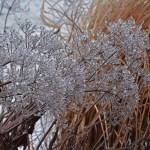 frozen-joe-pye-2