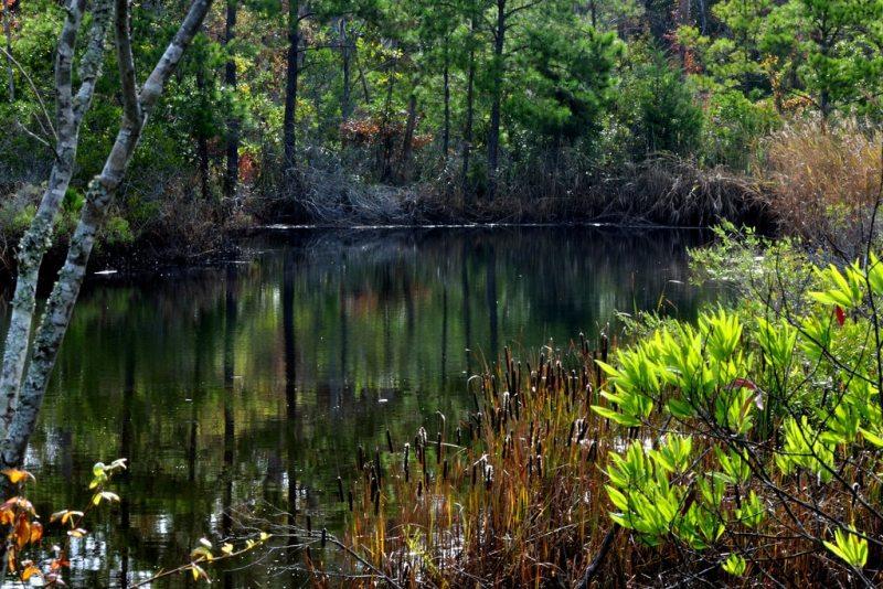Jean Guite Creek in Kitty Hawk Woods