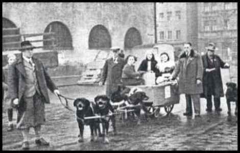 História do Rottweiler