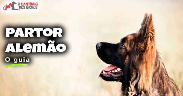 Cachorro Pastor Alemão em destaque