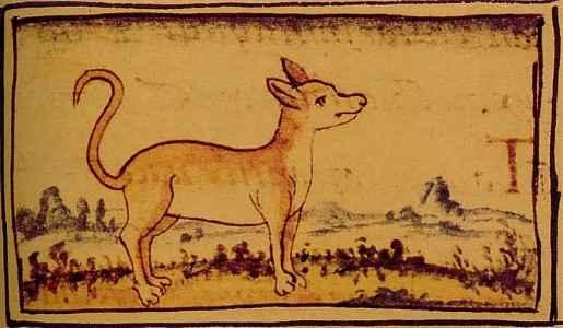 História do Chihuahua