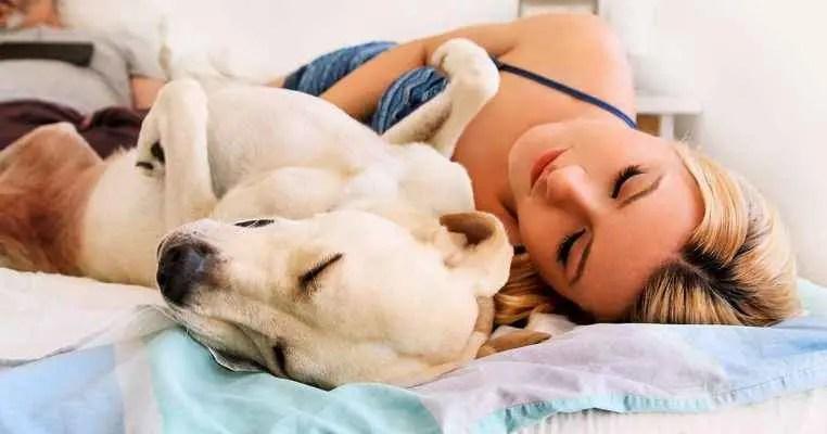 Dormir com um cachorro faz bem?