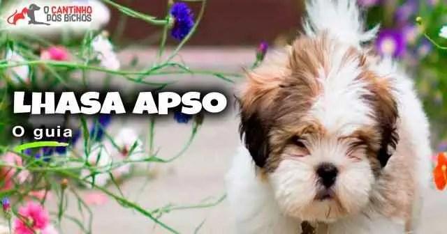 Cachorro Lhasa Apso em destaque