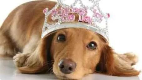 Nome de cadela com coroa na cabeça