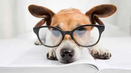 Nome para cães inteligentes