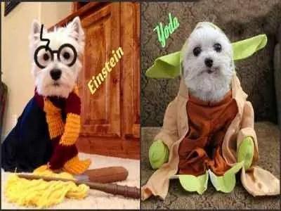 Cachorros nomes engraçados