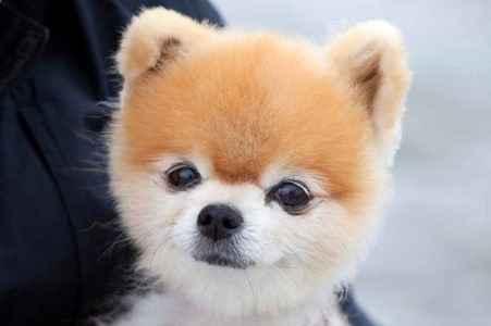 Cute Little Puppies With Name Drake Wallpaper 1300 Nomes De Cachorro Macho Significado De A At 233 Z