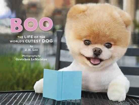 Cachorro boo