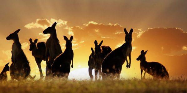 australia-3_70124992