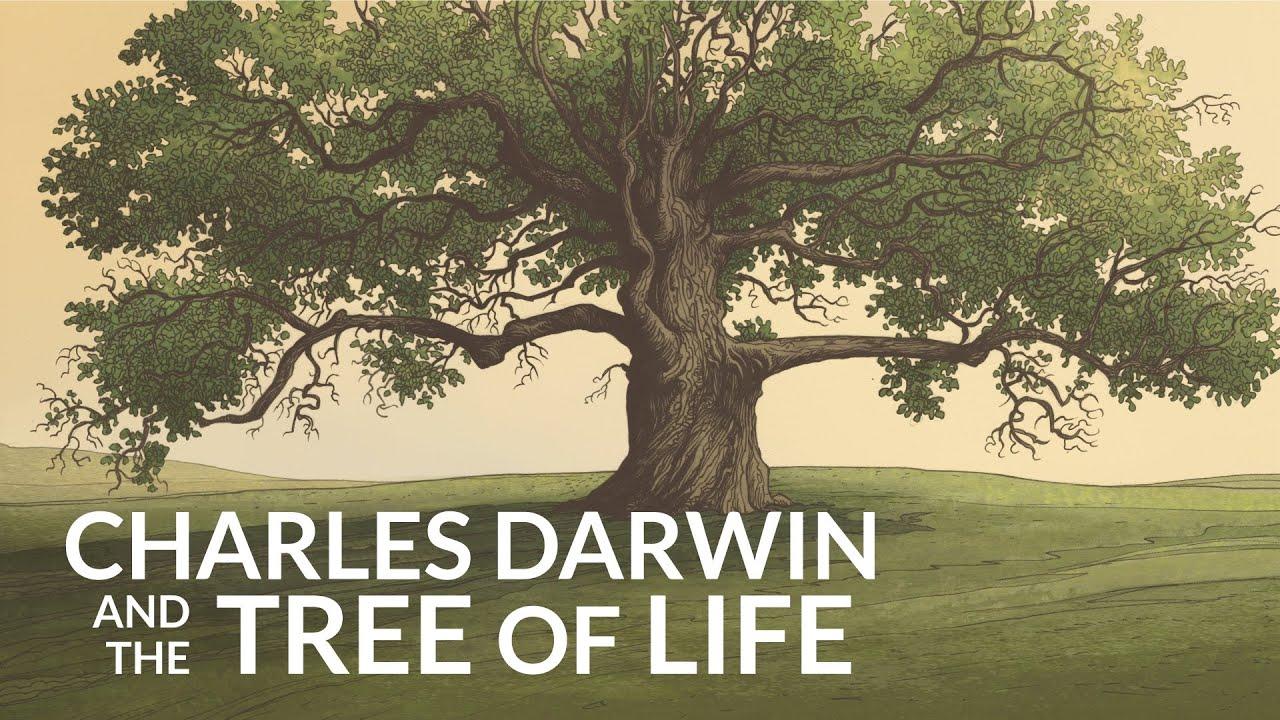 darwin-kelly