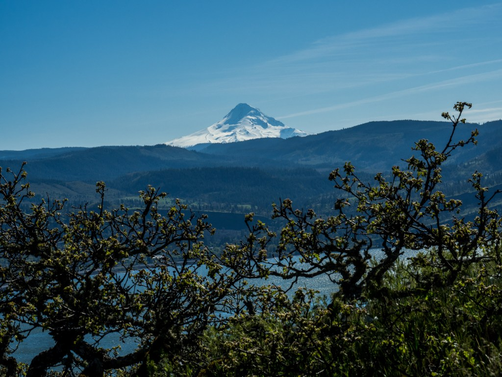 Mt. Hood from Catherine Creek trail