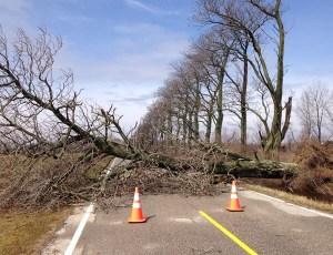 Trees fell over near New Era.