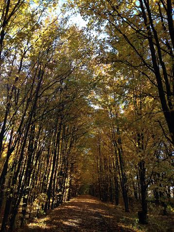 A view along the trail last fall.