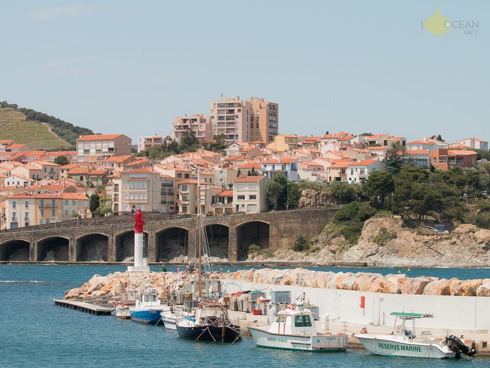 Banyuls-sur-mer, France. Credits: Pierre Olivier, Ocean Fact.