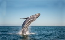 Gloucester Whale Watching Guided Wildlife Tours & Excursions
