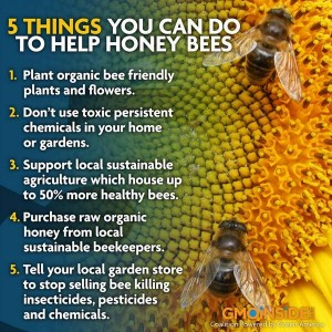 5 things to do to save bees