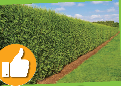 Grounds maint tidy hedge thumb