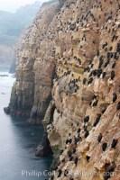 la jolla cliffs 18345