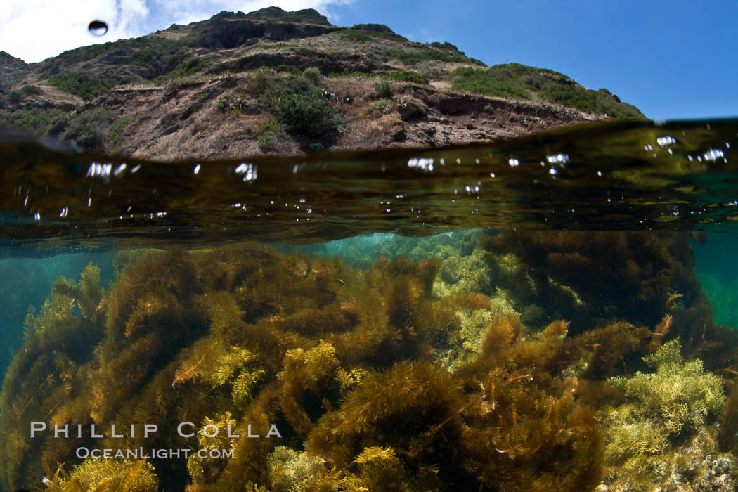 Underwater Photos of Marine Algae in Southern California and Baja California  Natural History