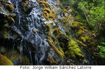 Jorge_William_Snchez_-_Santurbn