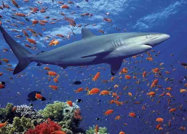 crearan santuario marino