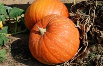 pumpkin_recipes_2.jpg