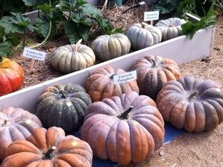 pumpkin_sale.jpg