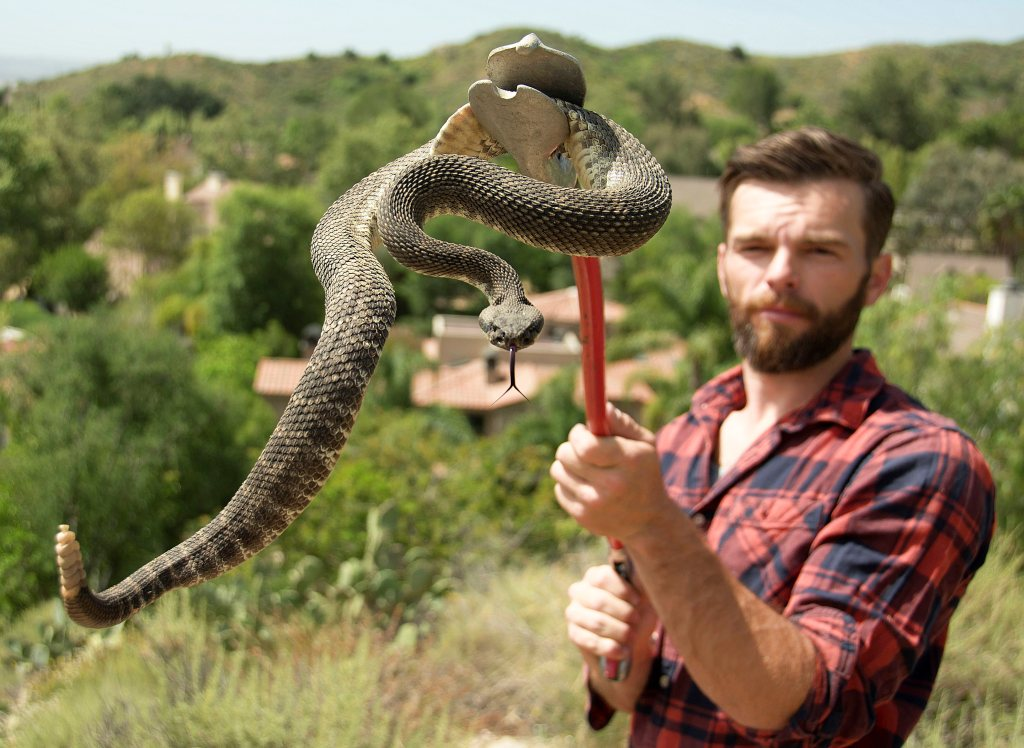 Expect snake sightings to jump in Orange County this