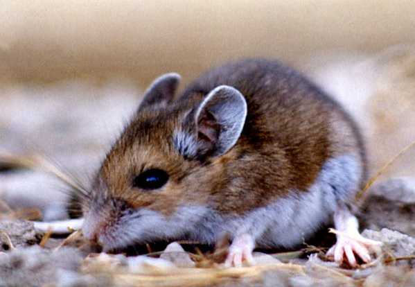 3rd death tied to Yosemite rodent virus – Orange County Register