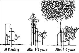 Tree Shelters