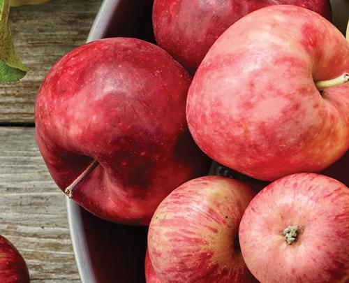 manzana roja propriedades