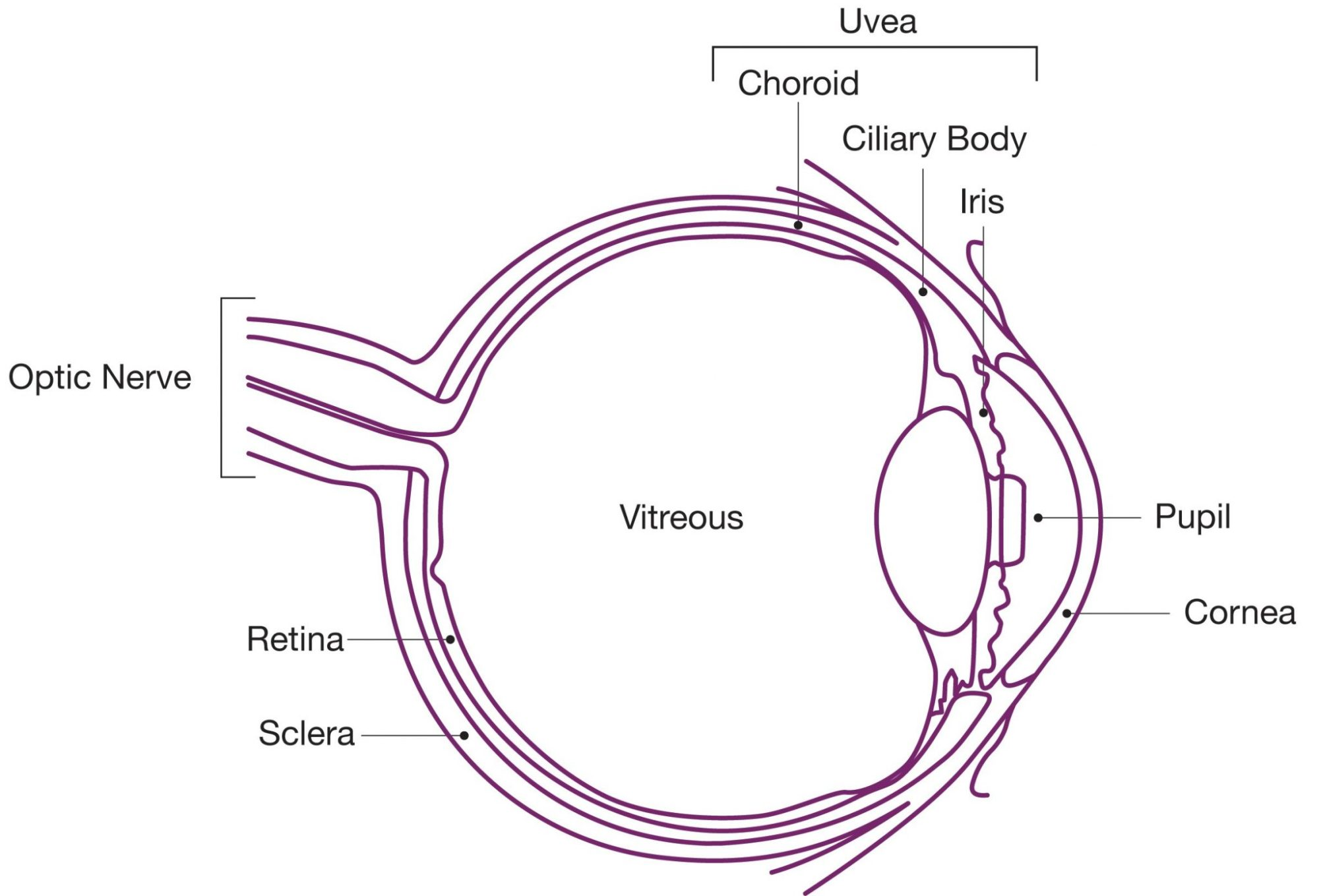 hight resolution of eye diagram website 2