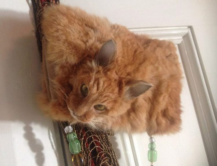 Taxidermist Turns Dead Cat Into A Handbag Sparks Controversy